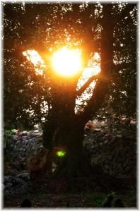 tramonto al trullo